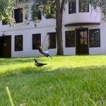 Музеј Вука и Доситеја - МВД - MVD - 4