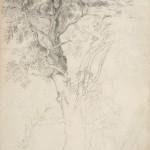 Димитрије Аврамовић, Студија дрвета (1838)